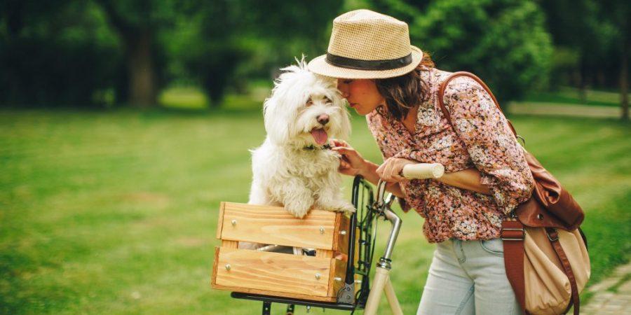 Sortie avec son chien